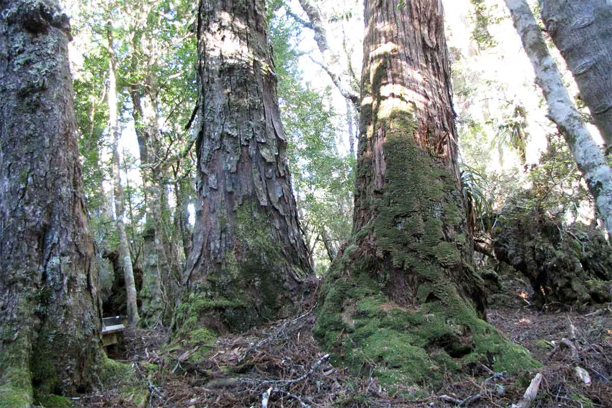 img-article-12x08-rainforest-old-growth